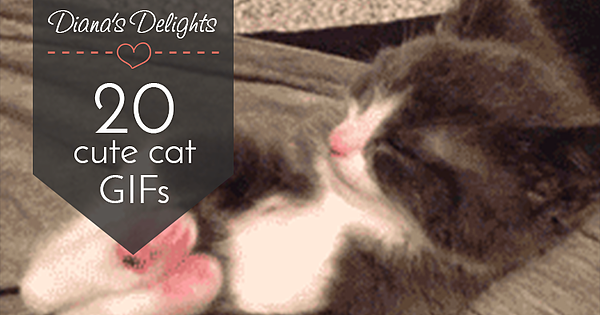 20 Cute Cat GIFs Guaranteed to Make You Smile